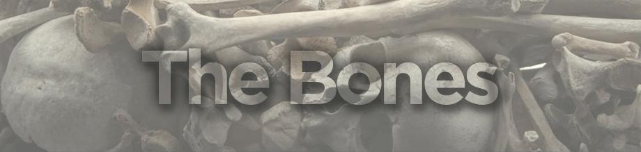 Vanson bones collection